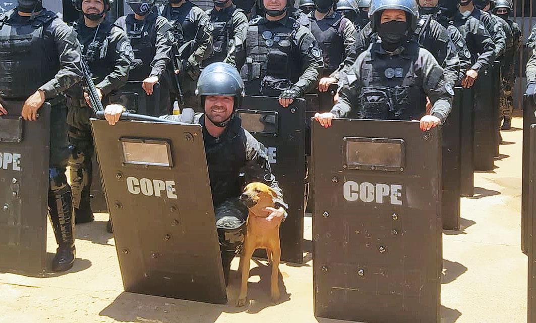 Covid, um cão vira-lata, encontra amor e cuidado em grupo operacional da  Agepen e vira mascote –